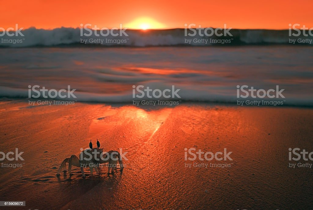 Crab on beach with beautiful background sunset stock photo