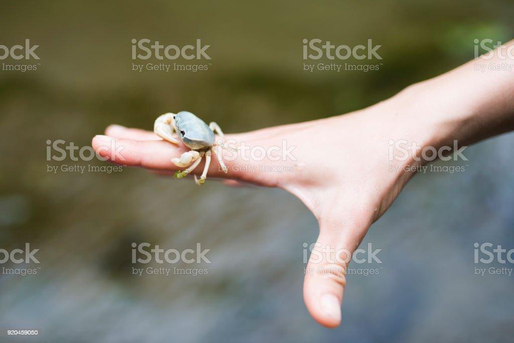 Crab on hand stock photo