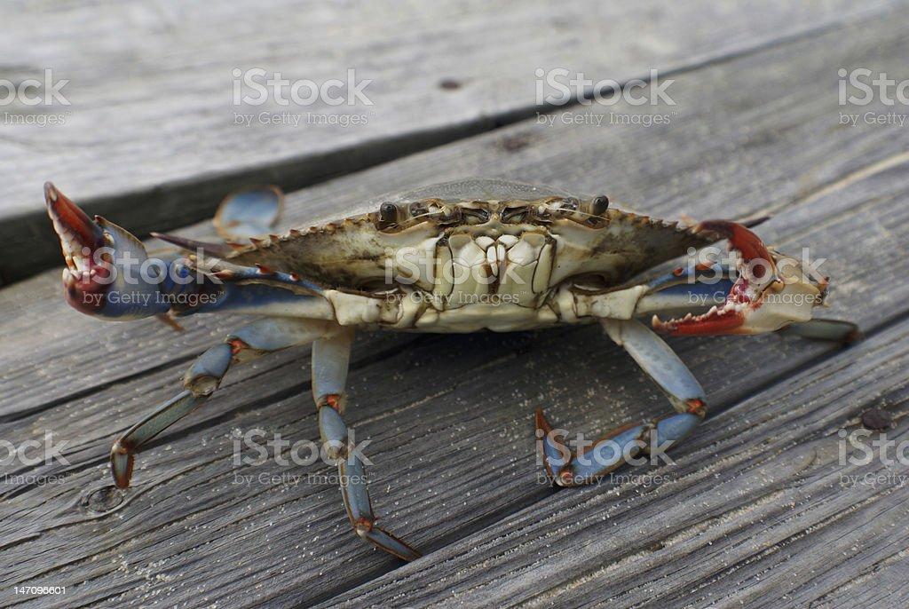 Crab on Pier stock photo