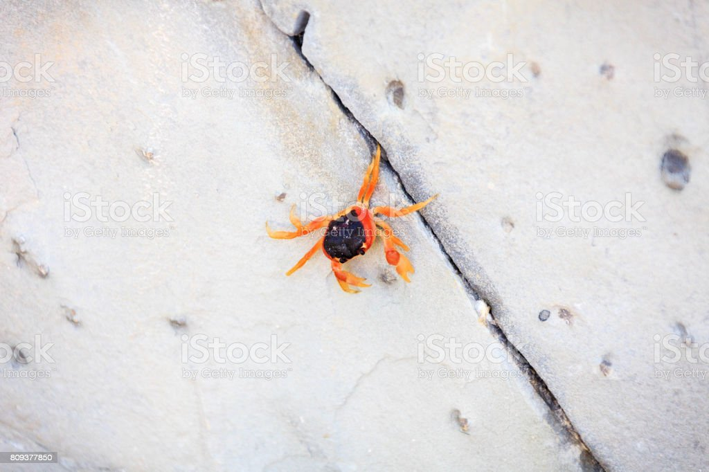 Crab on the beach in Bavaro stock photo