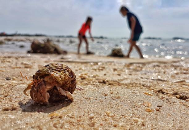 Krabbe am Strand – Foto