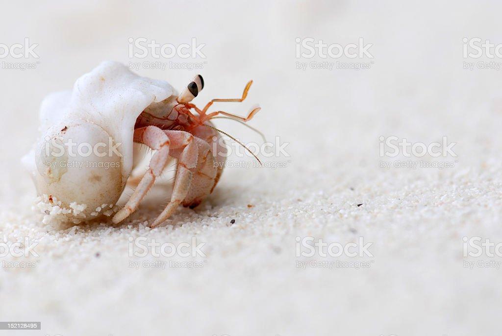 Crab on the beach stock photo