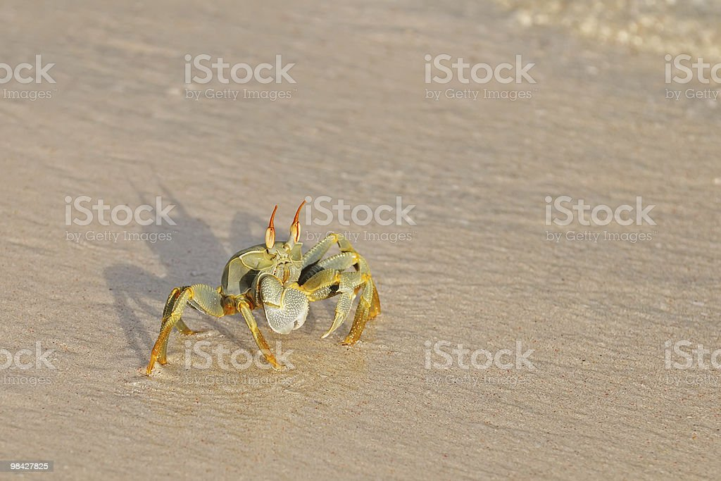 Crab on the beach royalty-free stock photo