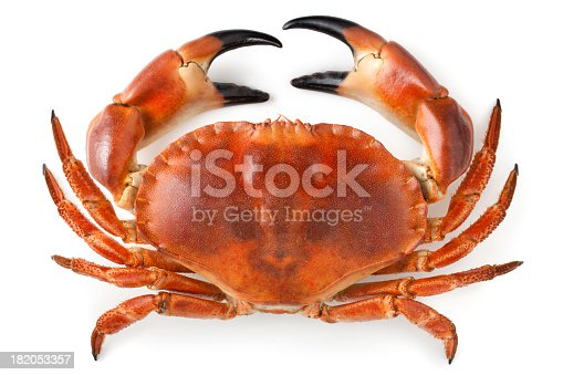 Crab.Similar photographs from my portfolio: