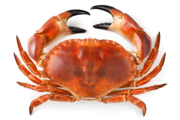 crab - krabba bildbanksfoton och bilder