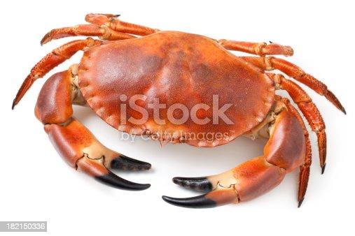 Crab.Similar photographs from my portfolio: