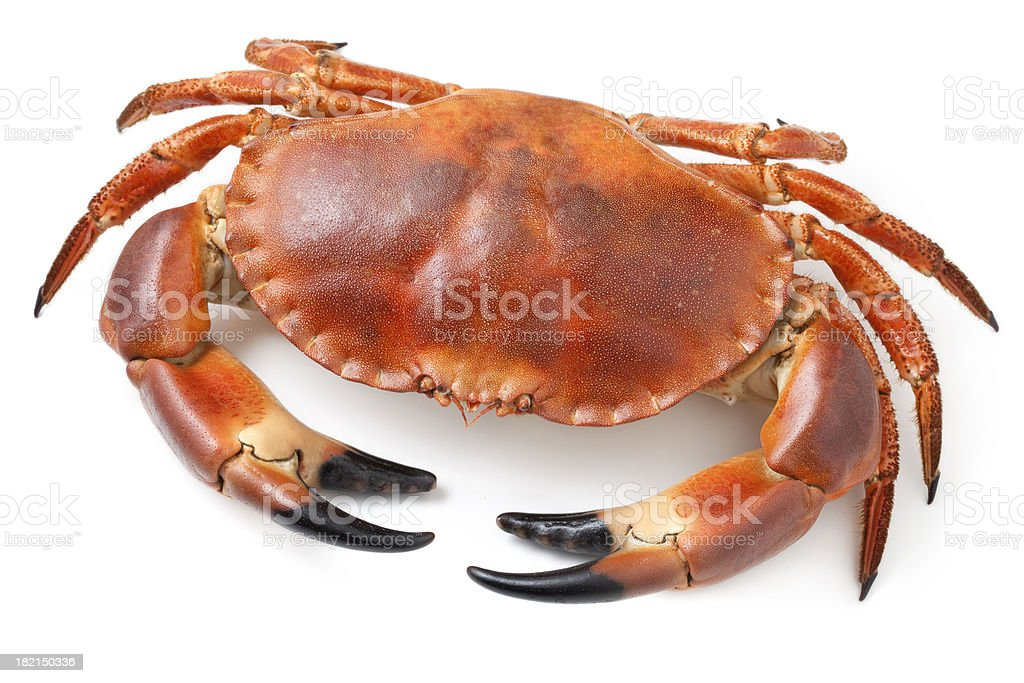 Crab stock photo