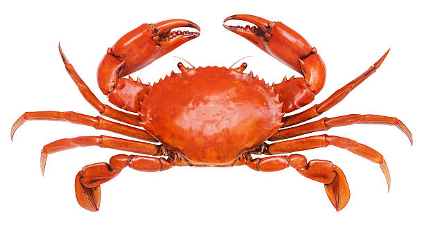 royalty free crab pictures images and stock photos istock
