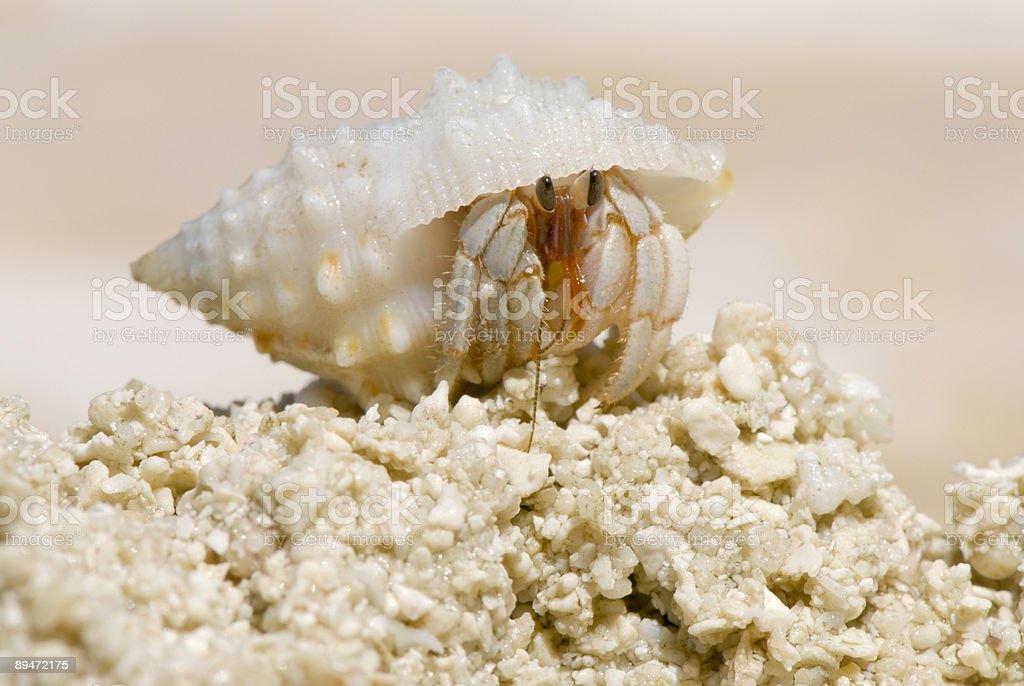 Crab royalty-free stock photo