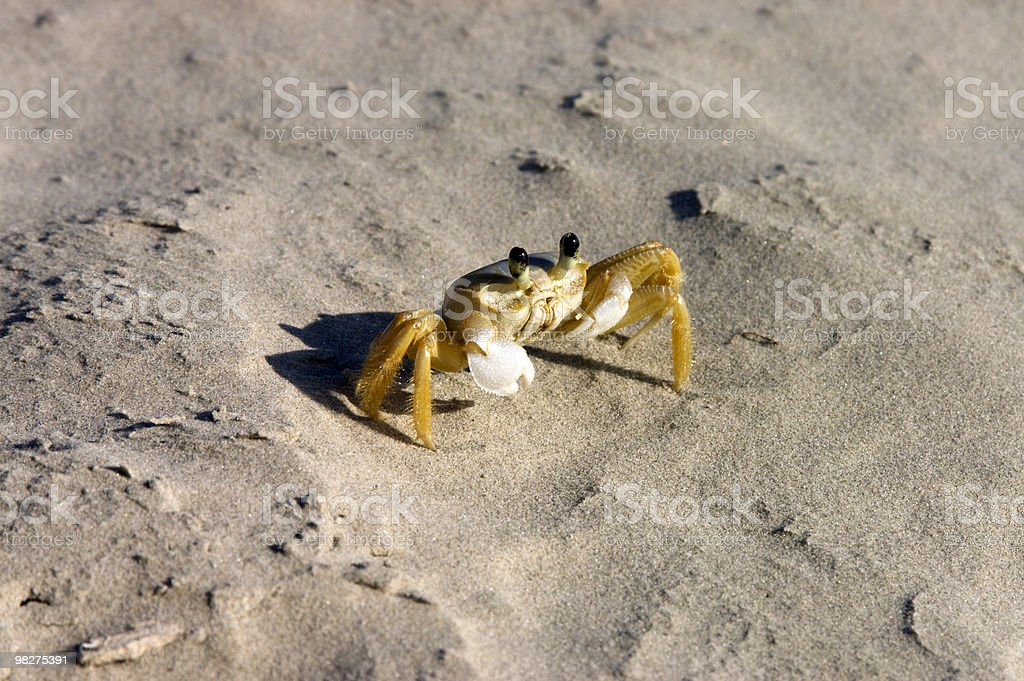 Crab royalty-free 스톡 사진