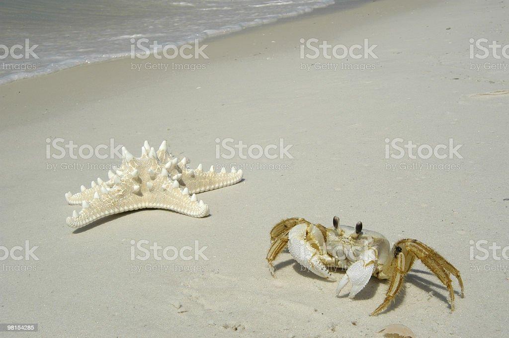 Crab & Starfish on the Beach royalty-free stock photo