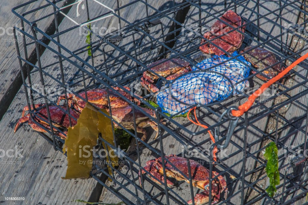Crab Trap stock photo