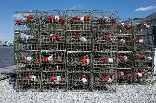 Crab Traps Crab traps sitting on the dock waiting for the opening of the blue crab season.  Steamed blue crabs are a popular dish along the eastern seaboard. ensnare stock pictures, royalty-free photos & images