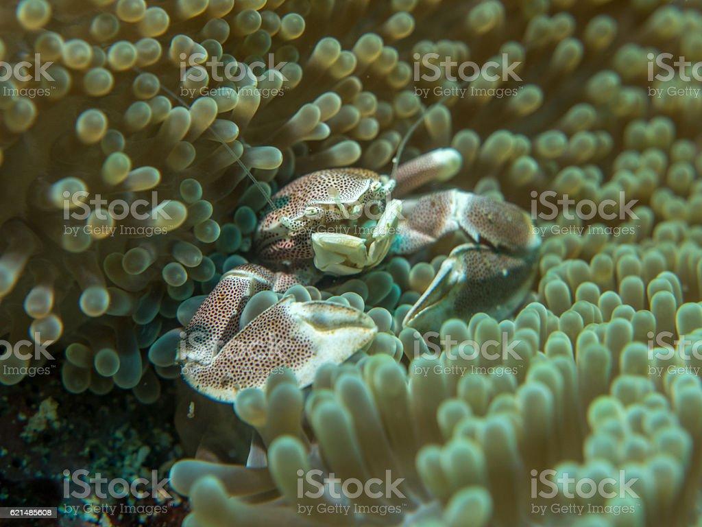 Granchio di mare foto stock royalty-free