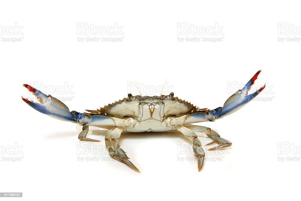 A crab with its claws in the air isolated on white stock photo