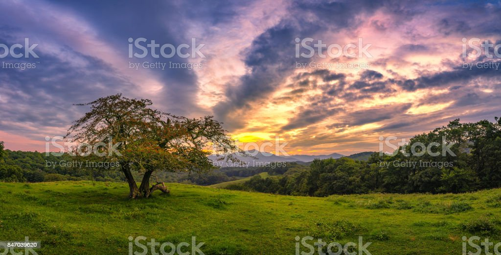 Crabapple tree and scenic sunset stock photo
