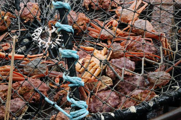 Crabbing stock photo