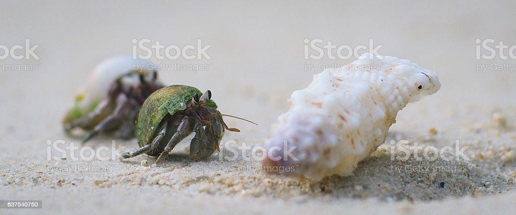 Crabby stock photo