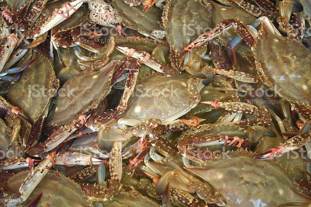 Crabs royalty-free stock photo