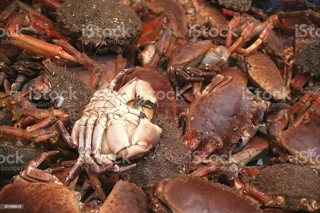 crabs & spider crabs royalty-free stock photo