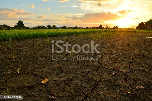 Crack and dry ground at rice field with sunlight in the evening.