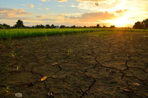 crack and dry ground at rice field with sunlight. - climate change stock pictures, royalty-free photos & images