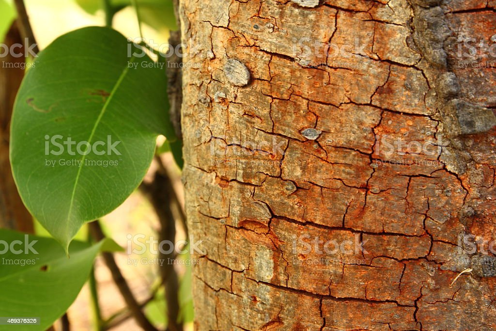 Crack of bark tree stock photo
