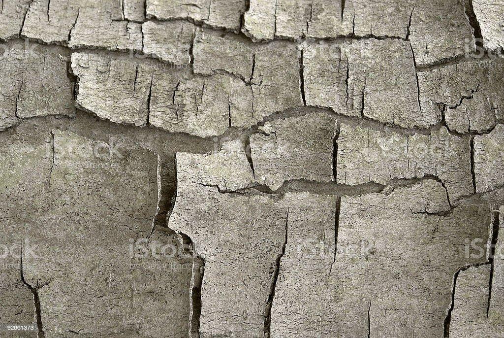 cracked bark detail royalty-free stock photo