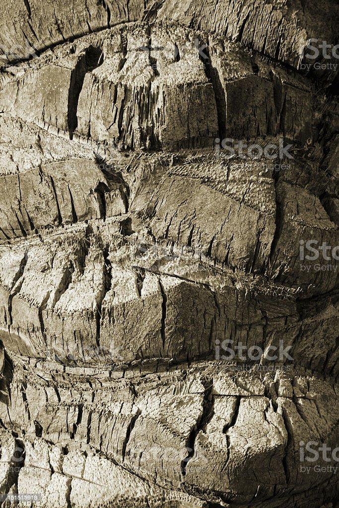 cracked bark royalty-free stock photo