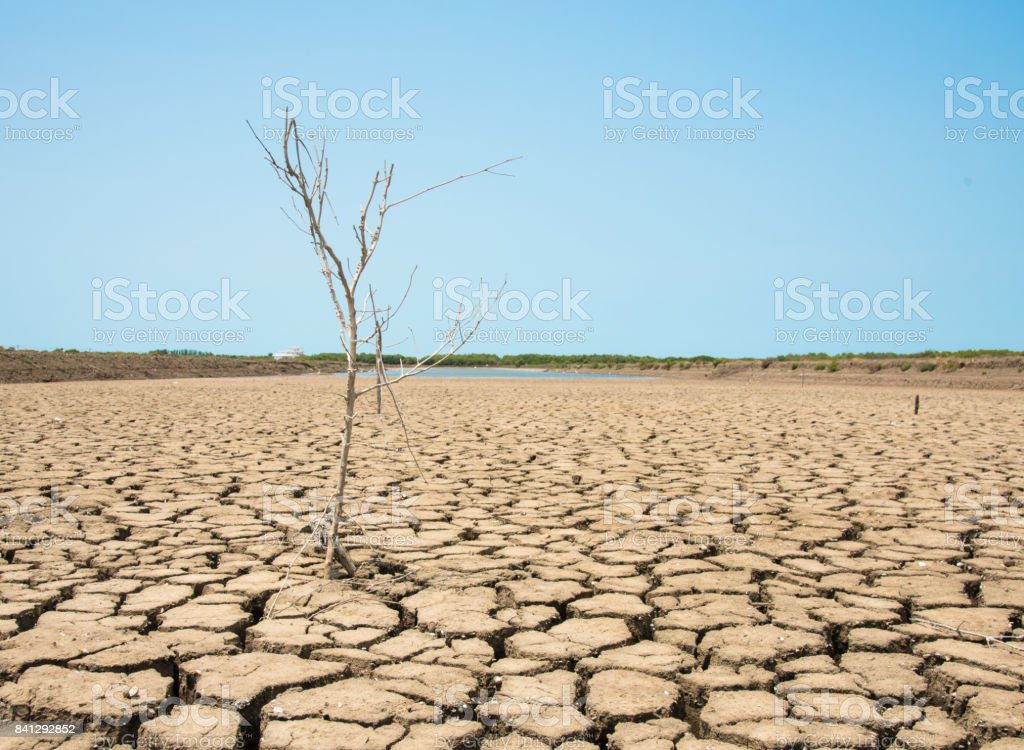 Cracked earth and dead trees stock photo