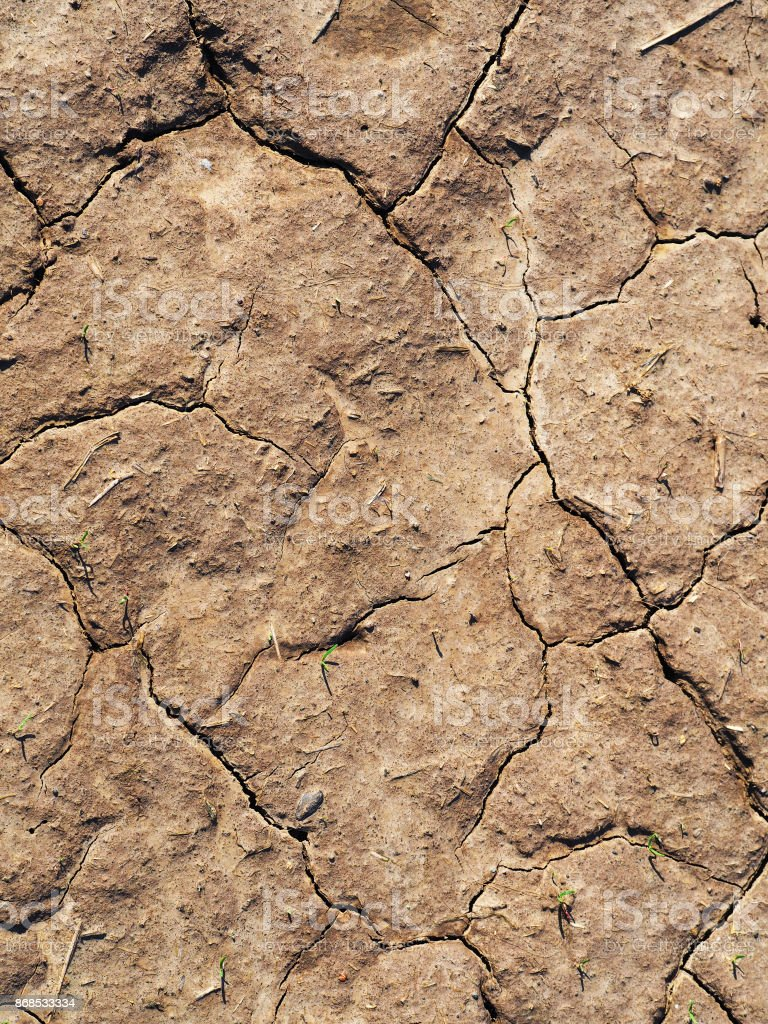 Cracked earth, lack of moisture. Ground texture. Green sprouts on dry soil. Top view stock photo