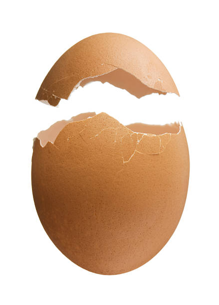 Cracked Eggshell stock photo