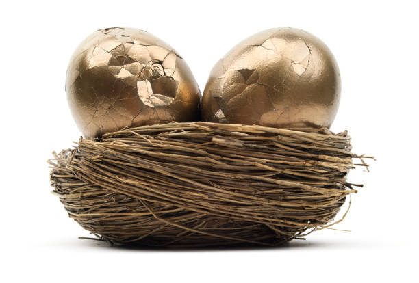 Cracked Gold Nest Eggs Isolated broken gold eggs in nest egg. nest egg stock pictures, royalty-free photos & images