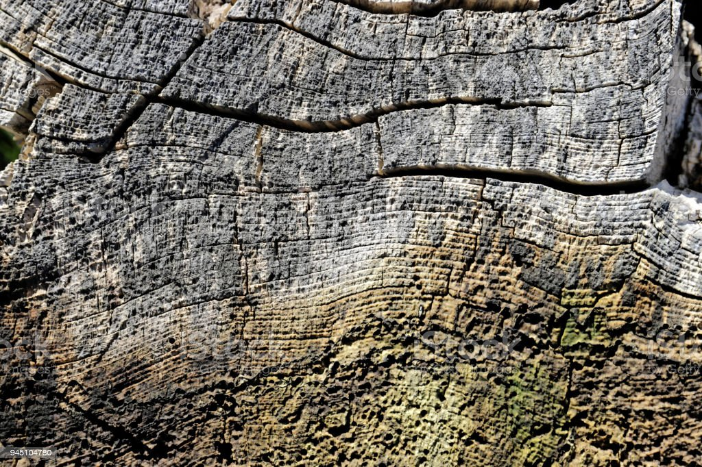 Cracked grey wood in section background stock photo