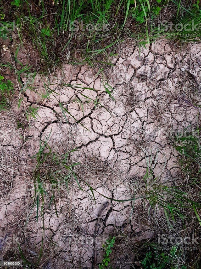 Solo rachado, caminho, solo com capim seco. Conceito de ecologia. Rachou a terra textura de fundo com gramíneas. Seco, campo, água, terra, areia. Terreno durante a seca. Papel de parede material, superfície abstrata. - foto de acervo