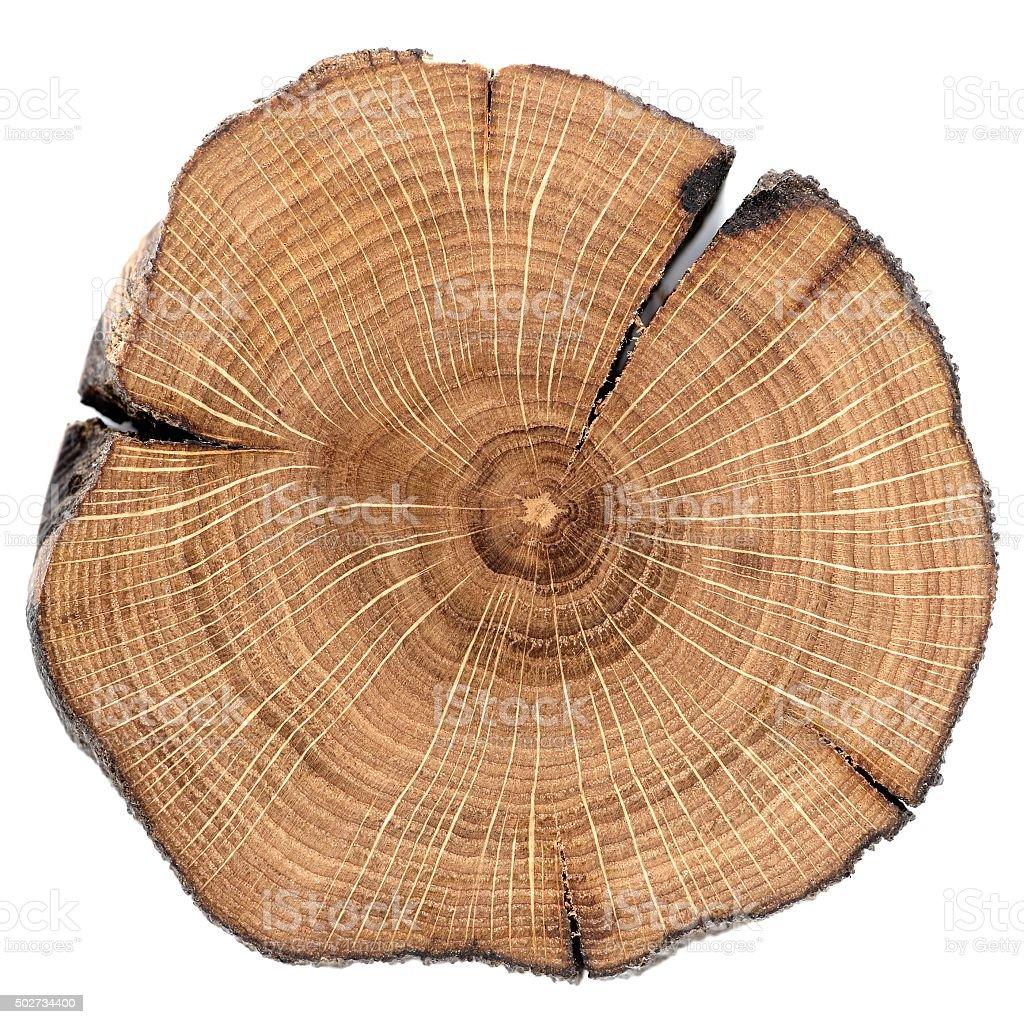 Cracked oak split isolated stock photo