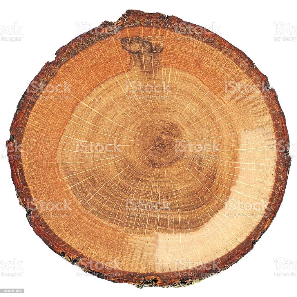 Gebrochen oak split mit Baumrinde isoliert – Foto