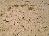 Cracked of dry soil in arid season. Dry cracked earth texture