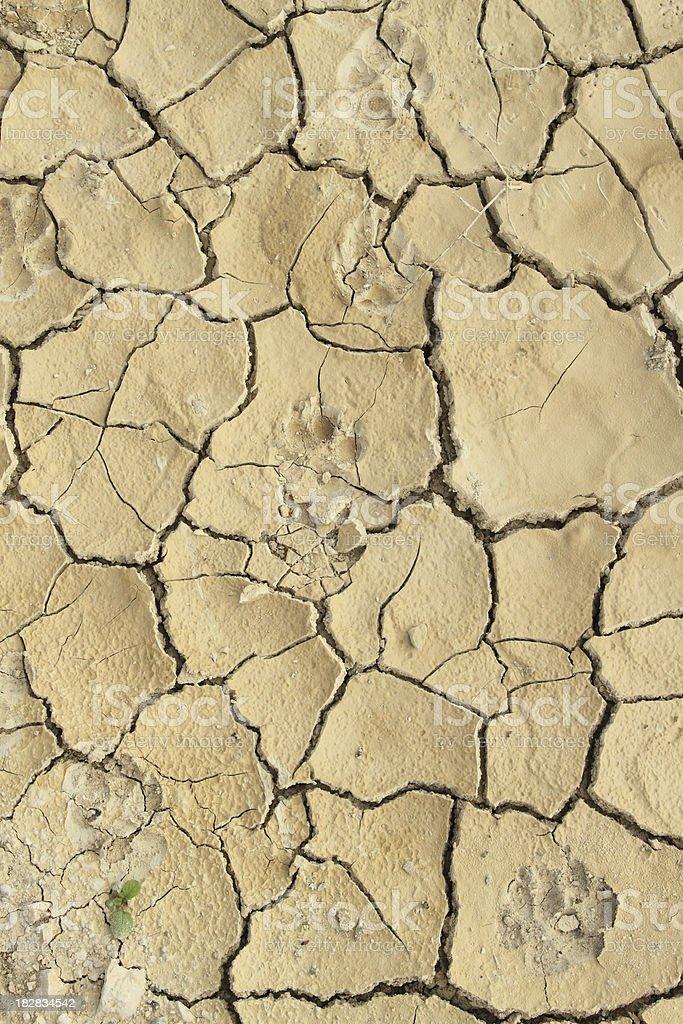 Cracked Soil royalty-free stock photo