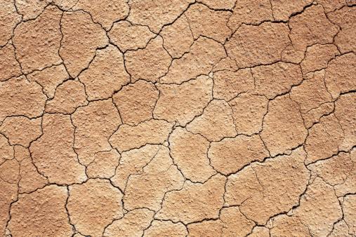 Cracks in the soil.