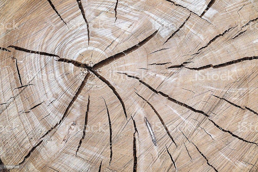Cracked tree royalty-free stock photo