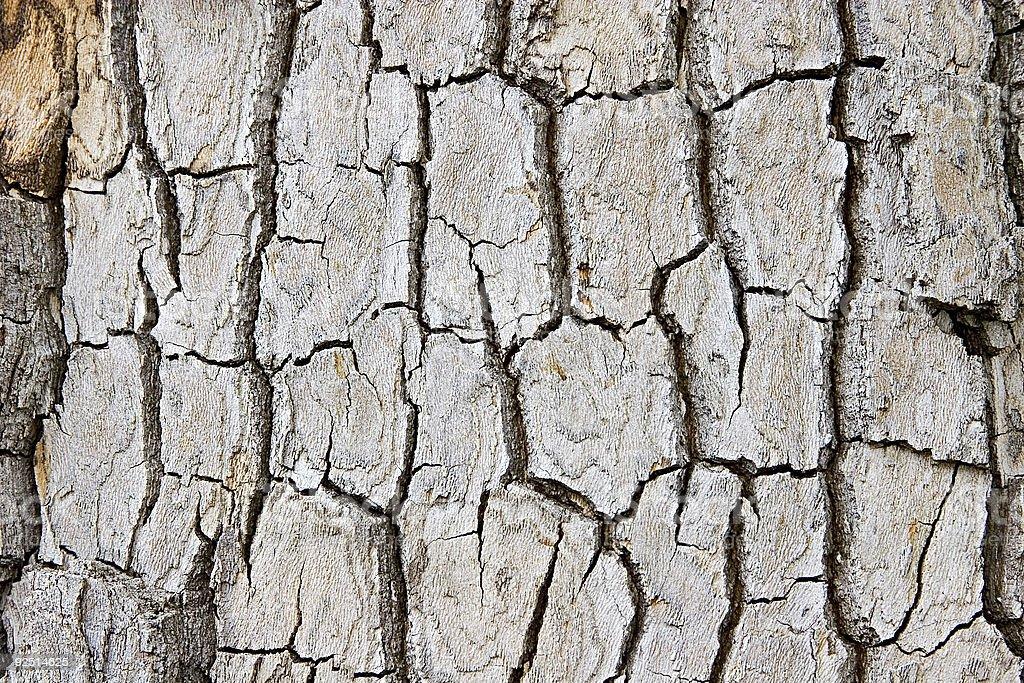 Cracked Wood Bark Texture. royalty-free stock photo