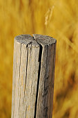 istock Cracked wooden post on a background of yellow and brown grass 1214734292