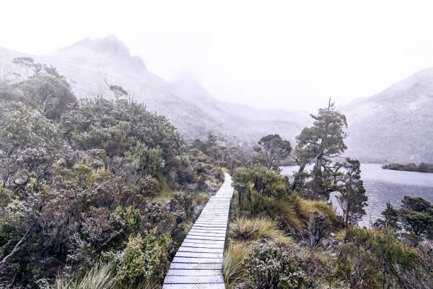 cradle mountain national park, australia - cradle mountain stock photos and pictures