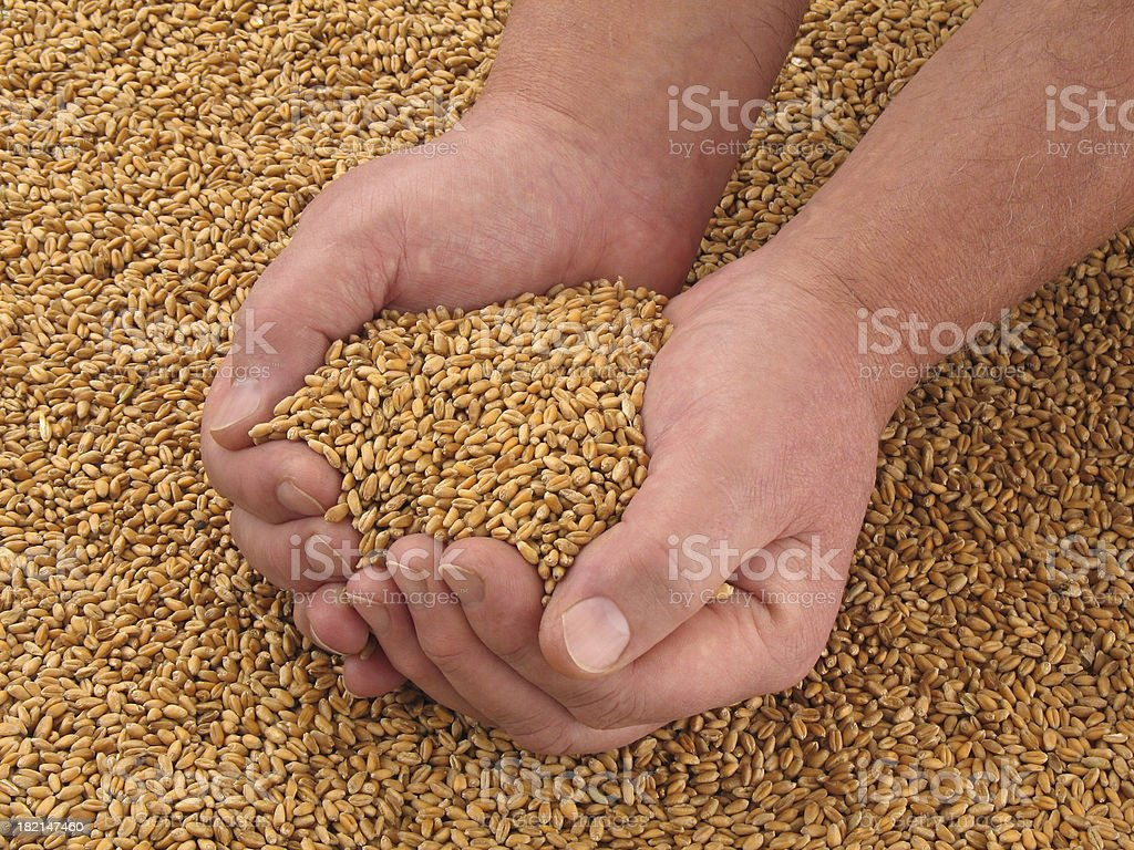 Cradle Of Bread IV royalty-free stock photo