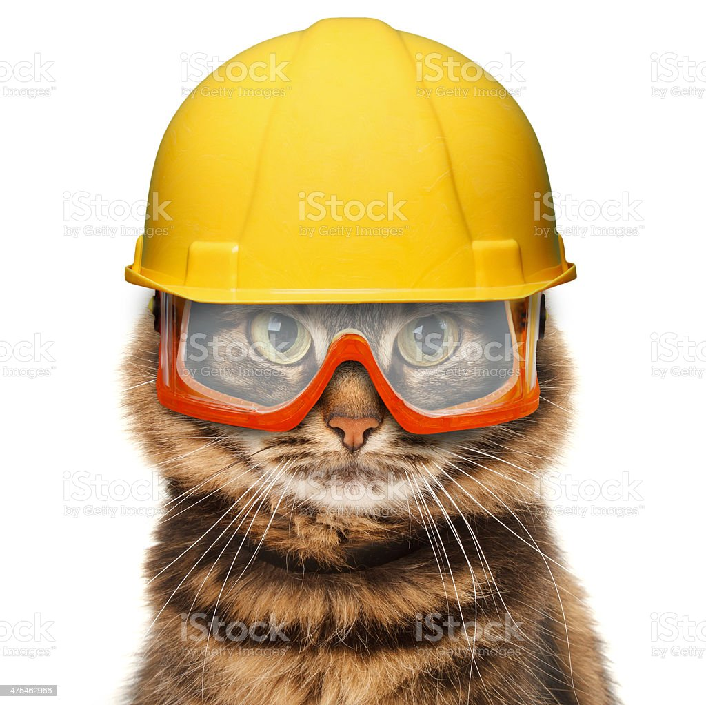 craftsman cat in white background stock photo