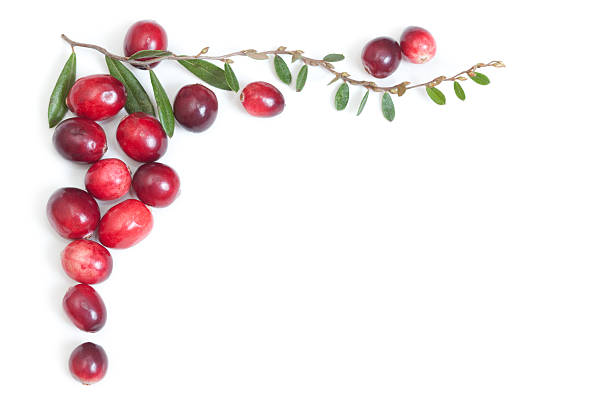 "Cranberries and Leaves Top Corner Frame ""Cranberries grow on thin vines with tiny leathery leaves, and spreads like a ground cover. Shown here is genuine cranberry foliage, pulled from a bog in South Jersey. Top corner border arrangement."" terryfic3d stock pictures, royalty-free photos & images"