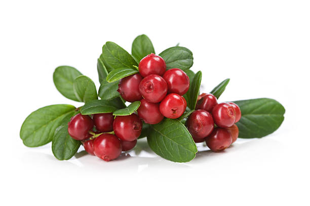 cranberries on white - cranberry stock photos and pictures