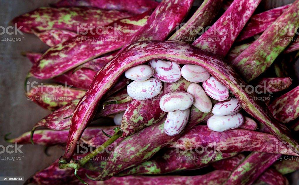 Cranberry Beans stock photo