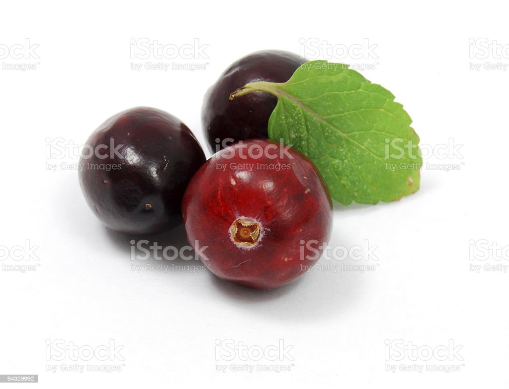 Cranberry Berry Fruit - Thanksgiving royalty-free stock photo